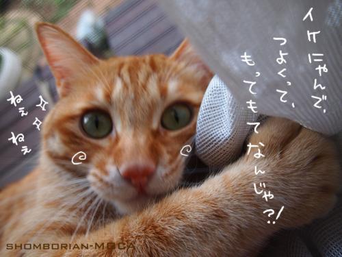 (*´・ω・`*)