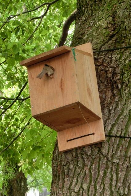 新しい巣箱 え~い入っちゃへ