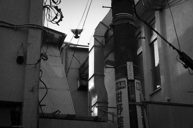 7_hibi20101023.jpg