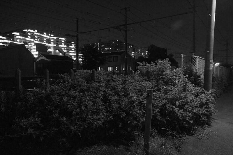 7_night_vision100807.jpg