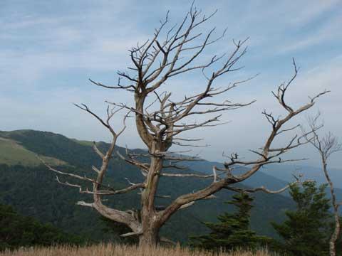 2011-07-24_0024hakkotu.jpg