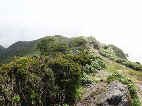 三嶺山頂から三嶺ヒュッテ方面