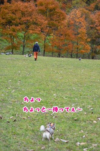 DSC_0027_20141018001121836.jpg