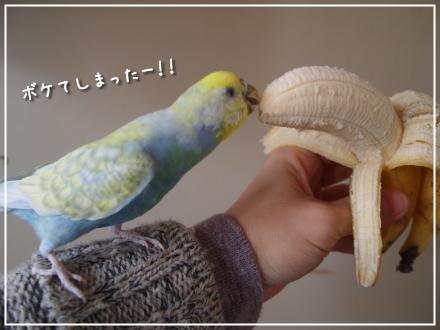 バナナとピーちゃん