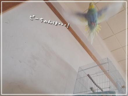 飛んでるピーちゃん3