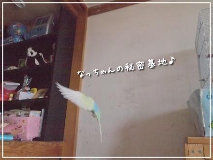飛んでるピーちゃん4