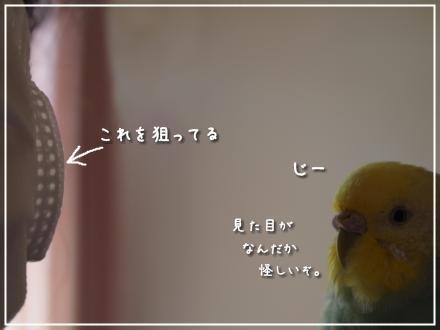 マスクとピーちゃん2