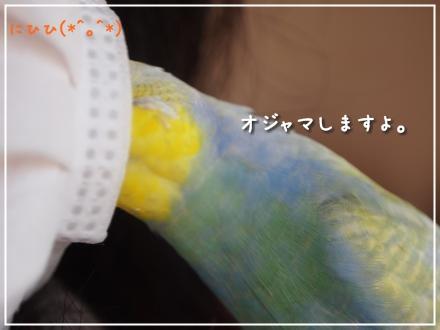 マスクとピーちゃん4