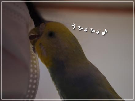 マスクとピーちゃん3