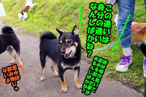20140923-051.jpg