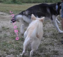 10.03愛ハス19