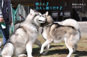11.03まらみゅー4
