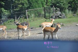 09.18富士8