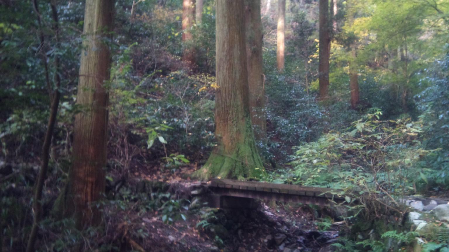 木の橋があります