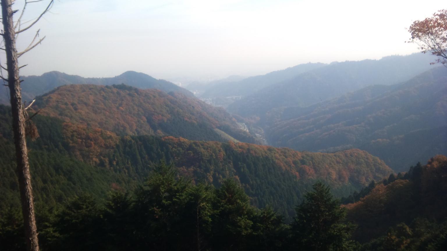 伐採地点からの展望