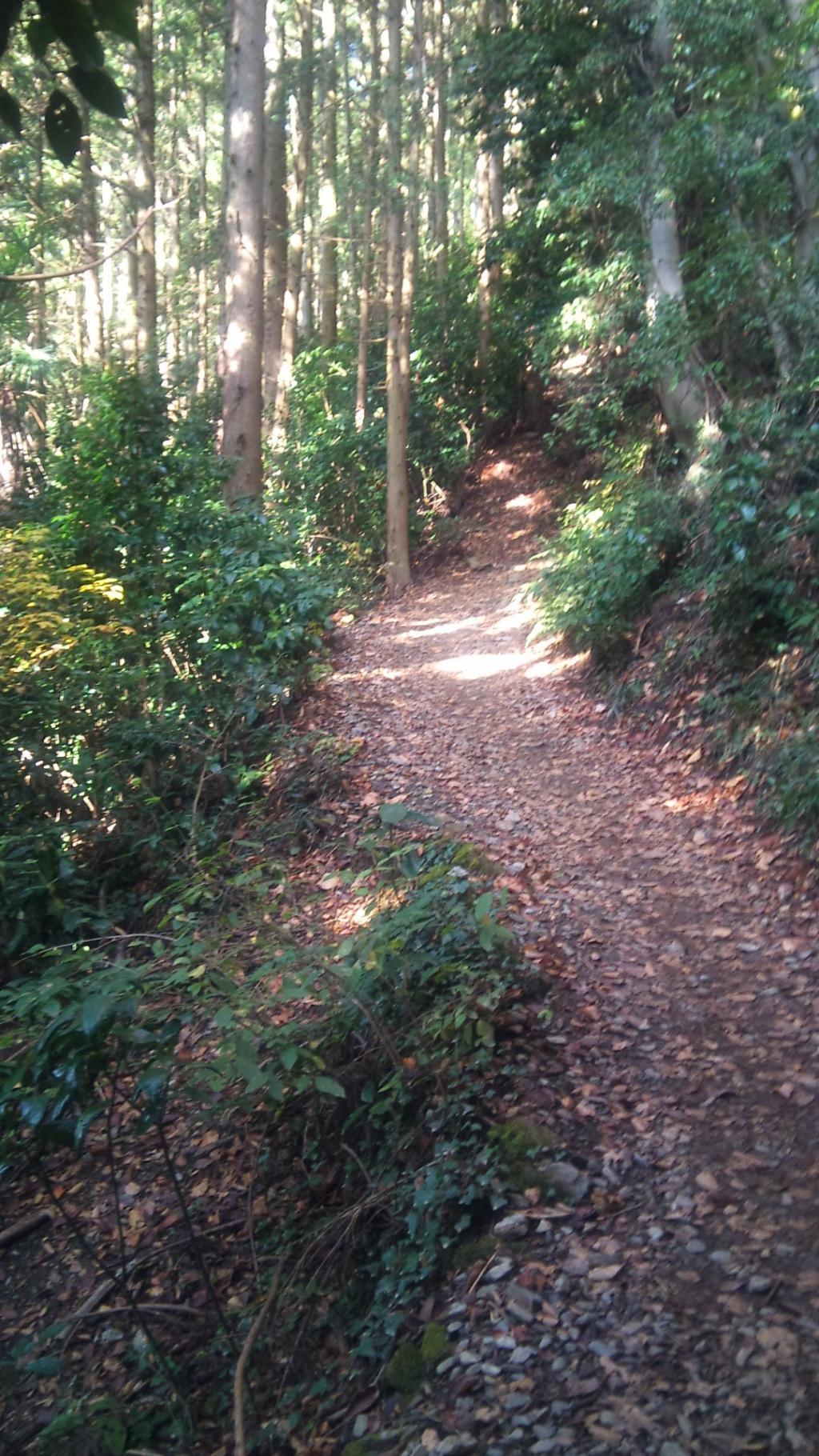 小仏からの登山道