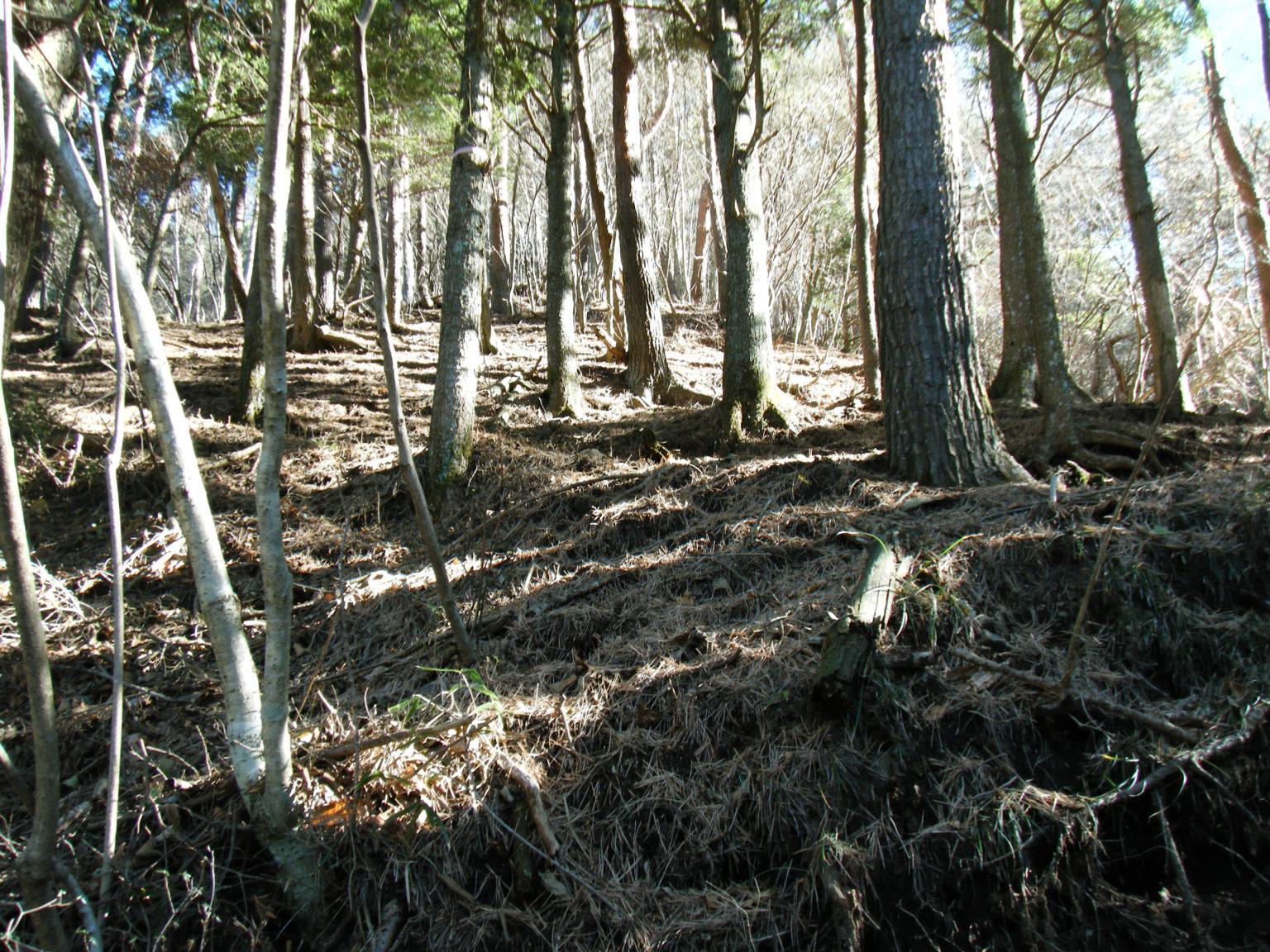 15木漏れ日