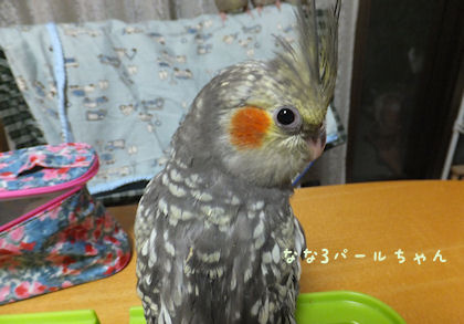 20110526nanahina3.jpg