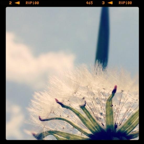 飛び立つ_IMG_0306