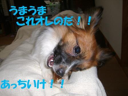 CIMG7983.jpg
