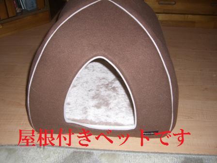 CIMG8125_20110106000408.jpg