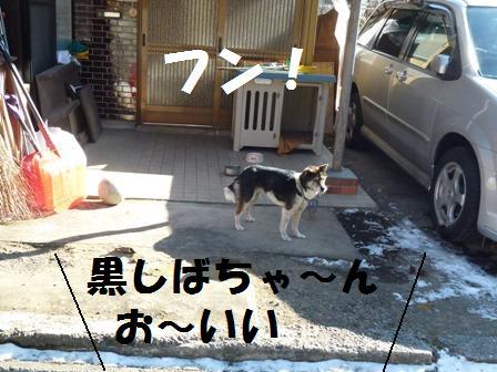 P1010949_20110202220337.jpg