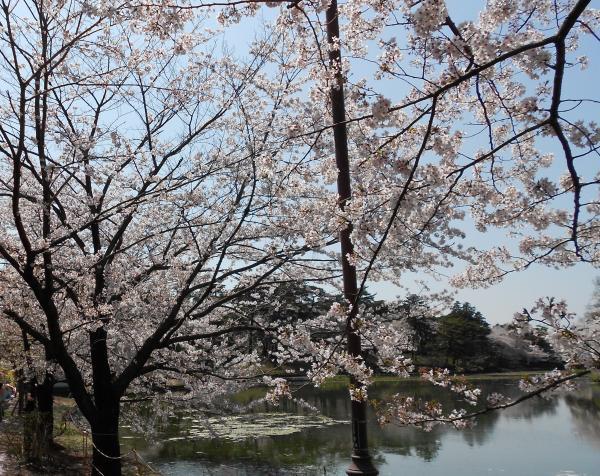 大宮公園・(2)_convert_20120415210852