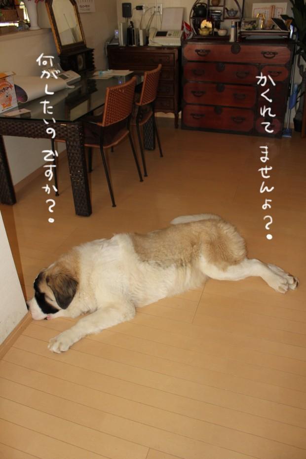 04_20110120002632.jpg