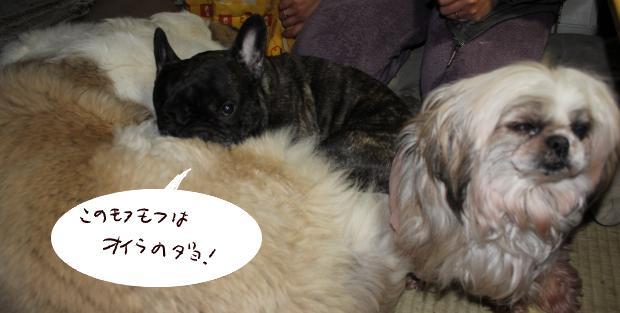 08_20110305101052.jpg