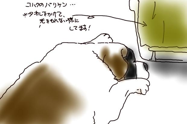 ヒナタ看病