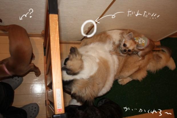 4_20110126002615.jpg