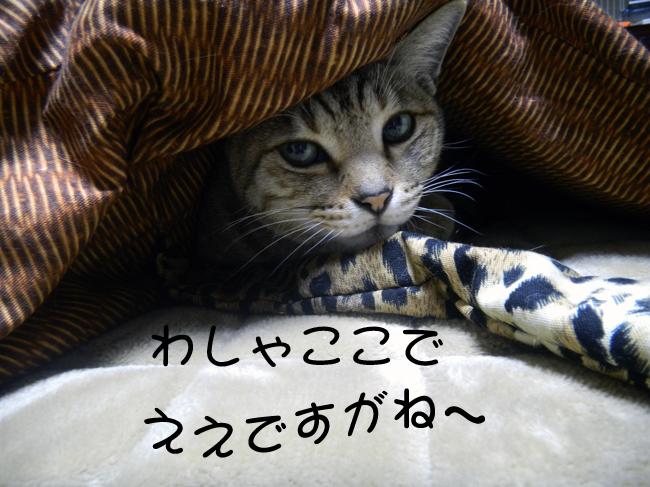 12-12-03-4.jpg