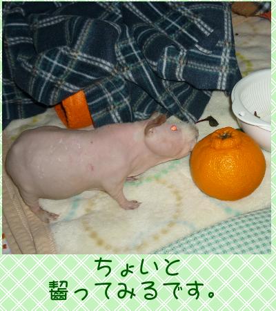 でこぽん20112
