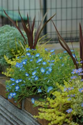 春のポット花壇