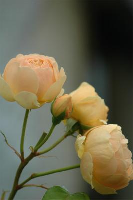 DSC_0022_20120609134324.jpg