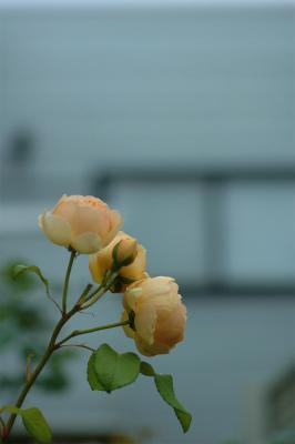DSC_0023_20120609133841.jpg
