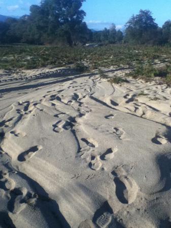 sables de maquis