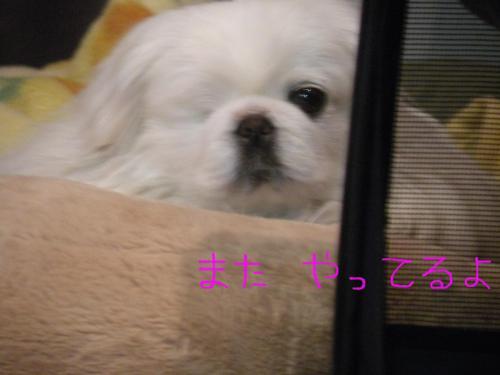 繧ウ繝斐・+・・DSCN1893_convert_20120407193814