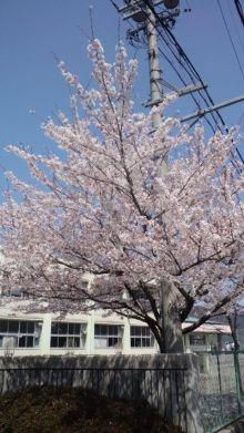 セラピストすみれのキラキラな毎日~ボチボチいきましょう☆-110410_1206~01.jpg