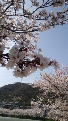 セラピストすみれのキラキラな毎日~ボチボチいきましょう☆-110410_1427~01.jpg