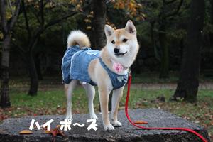niki14_20121130105137.jpg