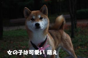 niki16_20121130105141.jpg