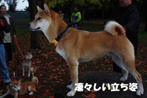niki17_20121130105135.jpg