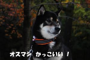 niki18_20121130110212.jpg