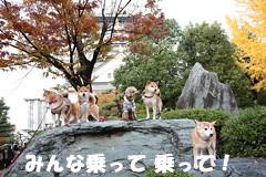 niki21_20121130110237.jpg