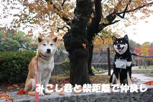 niki3_20121127235655.jpg