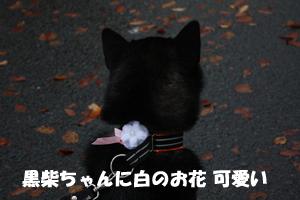 niki5_20121127235658.jpg