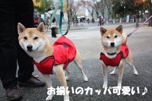 niki6_20121127235749.jpg