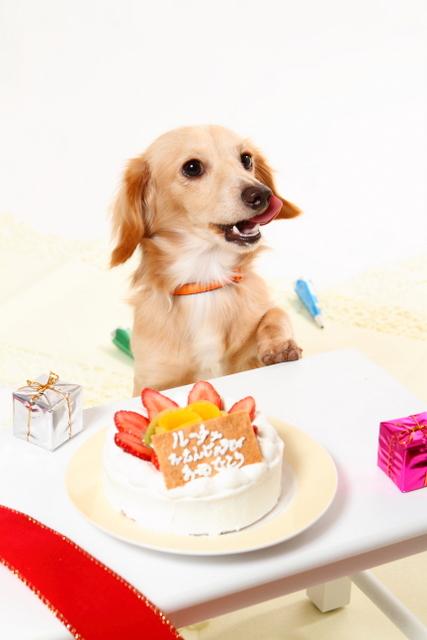 ケーキ食べちゃったワン! 美味しいよ♪