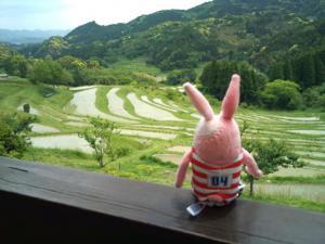 千枚田とウサギの背中。